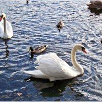 В парковом озере. :: Валерия Комова