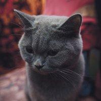 Поесть бы чего.... :: Дмитрий Беликов
