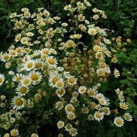 осенние цветы :: valeriy g_g
