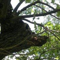 лесной олень :: Александр Корнелюк