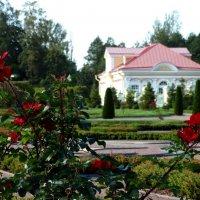 Розы и фотографы :: Владимир Гилясев