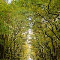 Дорога в осень. :: Андрий Майковский