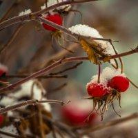 Зима на пороге :: Оксана Харламова