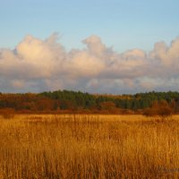 Облачка над лесом.. :: Антонина Гугаева