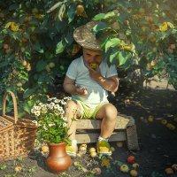 Яблочки :: Наталья Панина