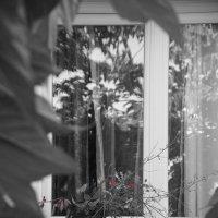окно , навеянное работами Йозефа Судека с маленькой неожиданностью. :: Елена Мартынова