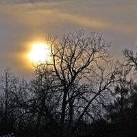 Гимн восходящему солнцу.... :: Tatiana Markova
