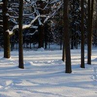 Дерева :: Яков Реймер