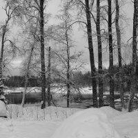 Черно-белое спокойствие :: Olga Shcherbakova