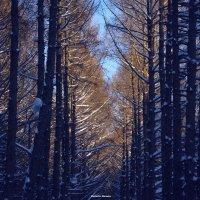 зимние :: Роман Буторин