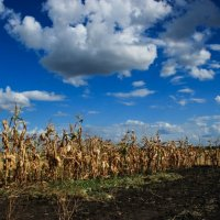 осень :: Yana sky