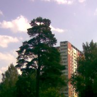 зеленоград :: михаил тележкин