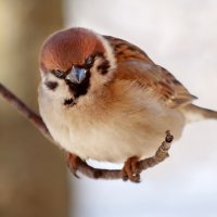 Сытая птица не замерзнет. Не ленитесь подкармливать зимующих птиц! Заодно и фотографируйте. :: Анатолий Тимофеев