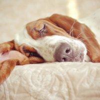 Спят усталые собаки ) :: Кристина Полянская