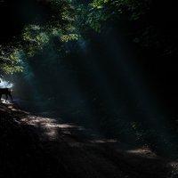 дух лісу :: Александр Элаш