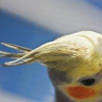 Птицы..они всегда красивы :: Валентина Глущенко