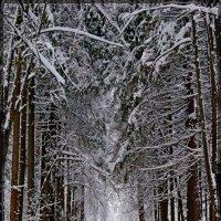 Прогулка по зимнему лесу. :: Александр Савицкий
