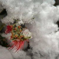 Снег в Иерусалиме :: Михаил Левит