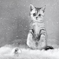 Снежный кот :: Наталья Кузнецова