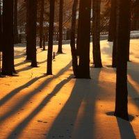 лес :: Ирина Полыгалова