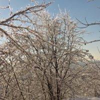 Мороз и солнце :: Игорь Мукалов