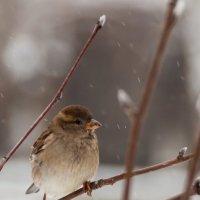 первый снег :: Наталья Панченко
