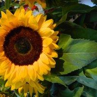 Маленькое солнце! :: Lina Liber