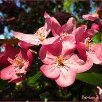 Весна красна! :: Василиса Никитина