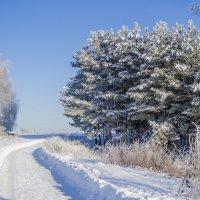 Зима за городом! :: Павел Данилевский
