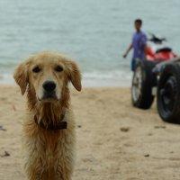 собака на берегу Сиамского залива :: Sofia Rakitskaia