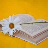 Романтичное чтение :: Юлия Fa