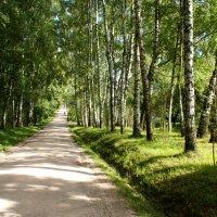 Ясная поляна :: Юрий Ковалев