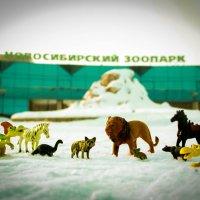Новосибирский Зоопарк :: Людмила Ильина