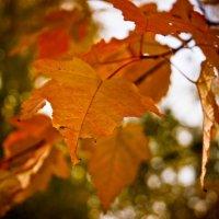 Золотая осень :: Дмитрий Ценгуев