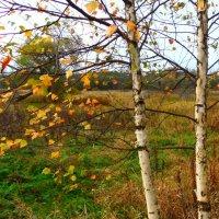 Осень. :: Ира Егорова :)))