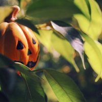 Halloween :: Алексей Ткачёв