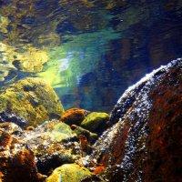 Горная речка взляд изнутри :: Андрей Акаёмов