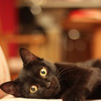 Кот..просто кот :) :: Екатерина Тарасова