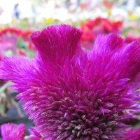 Бархатный цветок... :: Natiko Kim