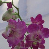 Кажется, орхидеи.... :: Natiko Kim