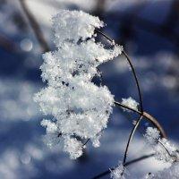 Зима :: Людмила Минтюкова