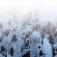 Зимняя сказка :: Оля Пронько