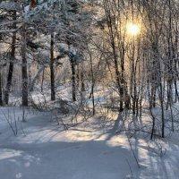 Солнце в зимнем лесу.. :: Владимир Зыбин