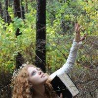 Лесная фея :: Виктория Целуйко