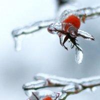"""Чудеса зимы..."" :: Оксана Стець"