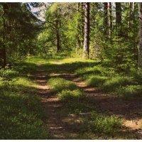 Дорога в лес манит... :: Марина Иванова