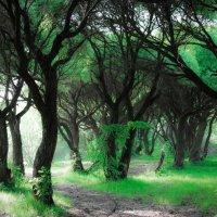 Ирина Толченникова - сказочный лес