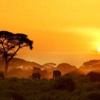 Дмитрий Бобров - Sunset :: Фотоконкурс Epson