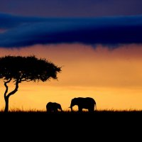 Дмитрий Бобров - Elephants :: Фотоконкурс Epson