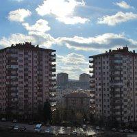 Солнечный день :: Elena Balatskaya